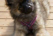 Tia my dog / My dog Mittelspitz