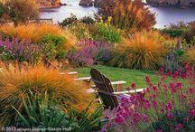 Windy exposed coastal garden: ideas!