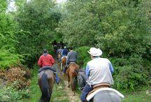 Passeggiate a Cavallo / Passeggiare a cavallo nei boschi della Calabria