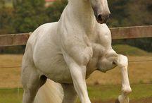 Sissies & Horses <3