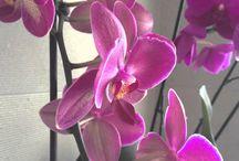 """""""orquideas"""""""