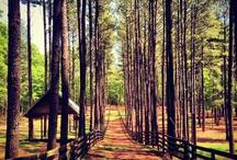 Serenbe Nature