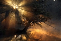 Let it Shine / by Kelly Randell