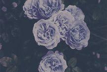 Flowers / Des fleurs pour adoucir le monde :3