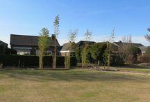 Garten / Home