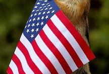God Bless America / by Billie Anderson Rauser
