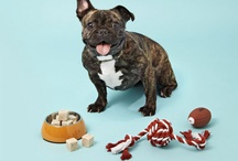 Pets: Homemade Treats and Food / Hoping to compile some healthy homemade treat recipes for dogs and cats.