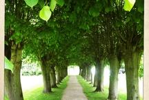 lime groves