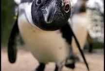 RANDOM - Penguins