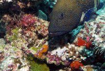 Env. Underwater