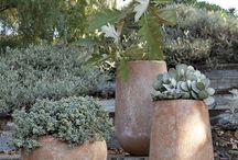 Gardens_Plants