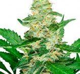 Storege weed