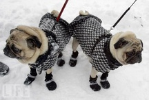 pugs my favorite dogs! / by Louise Lagerman