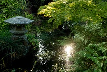 Irish National Stud & Japanese Gardens / The Irish National Stud, Kildare, Ireland