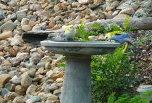 Landscape Garden Birds / Birds and Flower