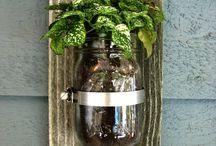 plants jar