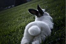 fuck yeah bunnies