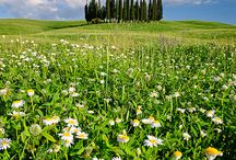 Val d'Orcia & Tuscany / It's one of the best regions in Italy that I always want to go back.