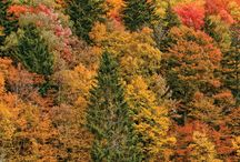 Farge paletter