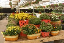 Fall / Fun displays, colors and ideas