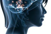 Neurosciences / Recherche en comportement