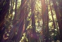 Muir Woods / by Golden Gate National Recreation Area