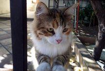 Καραμελίτσα....and friends /  lovely cats