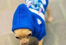 Yava / My cute little doggy :)