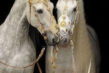 Hevonen (love)