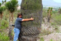 Kaktusy, cacti, cactus / Obrazy kaktusov a ich kvetov.