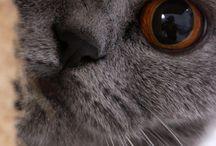 Cats ♥ / Meow