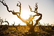 visit Terre del Primitivo / some tourist info and photo about the land of Primitivo di Manduria wine