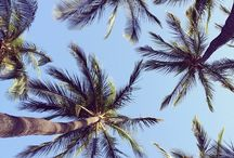 Tropical  / All tropical, boho, natural, summer things you will love.