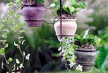 Dingen om te planten / gardening