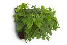 壁掛け 植物