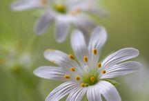 Flowers / by Kayla Siverd