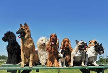 Kalbimdeki Patiler-Eğitim / Eğitimin, hayvanlar kadar hayvan sahiplerinin de yaşamını kolaylaştırdığına inanarak; kedilerin eğitilip eğitilemediği, köpeklerde davranış bozuklukları, kedi ve köpeğin tanışma ipuçları gibi pet eğitimine dair birçok özel bilgi Eğitim kategorisinde paylaşılıyor.