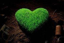 Sustainable beauty
