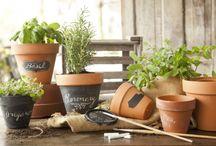 Garden Inspiration / by Paula Deen