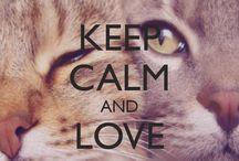 Gatos, minha paixão.