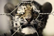 Animalistic / by Denise Polk
