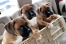 Boxers / The cutest Boxer dogs within the Feature My Pet community, and elegant Boxer themed jewelry.
