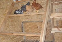 Homesteading - Raising Animals