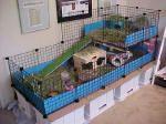 DIY animal ideas