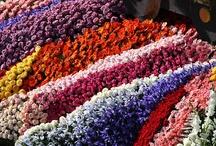 Flower Parades
