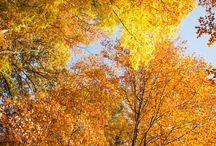 Herbstimpressionen / Der Indian Summer im Herzogtum Lauenburg - einfach magisch.