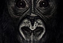 Animals / by Tom Lee