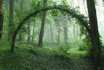 Göra min skog vackrare