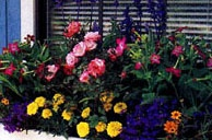 Gardening / This is my dream to start my own container garden.  Here are pictures and ideas.  This is good for people who live in apartments or condos or who have very little space