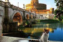 Gatti Romani